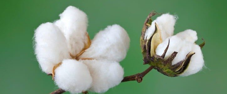 Органичен памук
